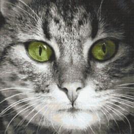 Wzór graficzny online - Zielonooki kot