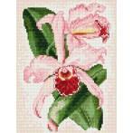 Kanwa z nadrukiem - Storczyk- różowe zauroczenie