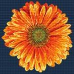 Kanwa z nadrukiem - Pomarańczowy gerber