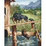 Kanwa z nadrukiem - Psie figle