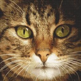 Kanwa z nadrukiem - Kot Lucky