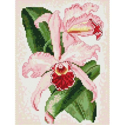 W 4089 Wzór graficzny ONLINE pdf - Storczyk - różowe zauroczenie