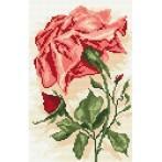 Wzór graficzny online - Róża czerwona