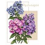 Wzór graficzny - Barwne hortensje - B. Sikora-Małyjurek