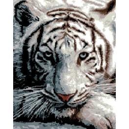 Wzór graficzny - Tygrys syberyjski