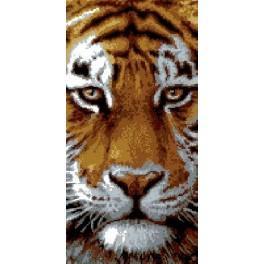 GC 6536 Wzór graficzny - Tygrys