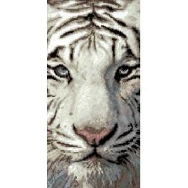 GC 6537 Wzór graficzny - Tygrys syberyjski