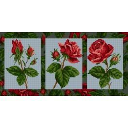 GC 6552 Wzór graficzny - Róże