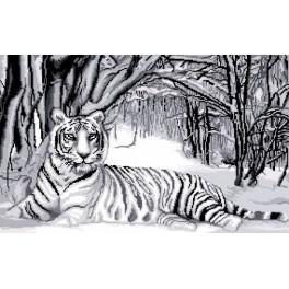 GC 7166 Wzór graficzny - Biały tygrys