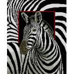 Kanwa z nadrukiem - Zebra