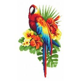 Aida z nadrukiem - Bajeczna papuga haft krzyżykowy
