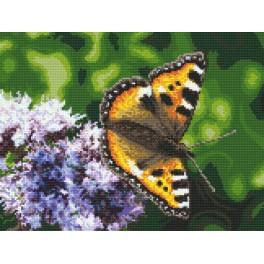 Aida z nadrukiem - Motyl
