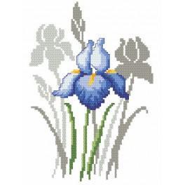 Aida z nadrukiem - Wiosenne kwiaty - Irysy