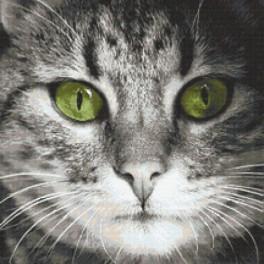Zestaw z nadrukiem i muliną - Zielonooki kot