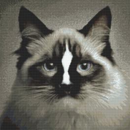 Zestaw z nadrukiem i muliną - Kot ragdoll
