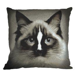 Wzór graficzny online - Poduszka – Kot ragdoll