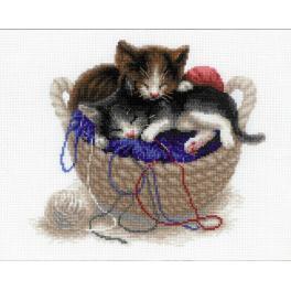 Zestaw z włóczką - Kocięta w koszyku