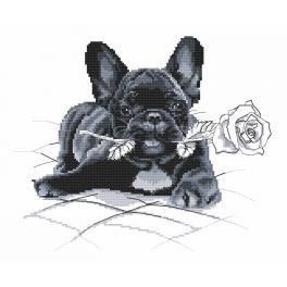 Wzór graficzny online - Buldog francuski - Przepraszam