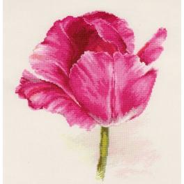 Zestaw z muliną - Tulipan - purpurowy blask