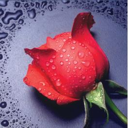 Zestaw do diamond painting - Czerwona różyczka