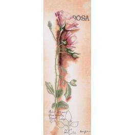 LPN-0008050 Zestaw do haftu z podmalowanym tłem - Róża botaniczna