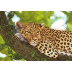 Zestaw z muliną i podmalowanym tłem - Jaguar