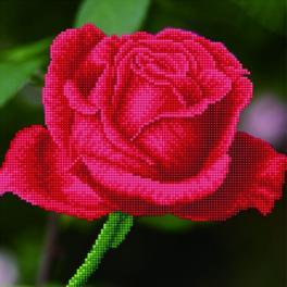 DD5.038 Zestaw do diamond painting - Kwitnąca róża