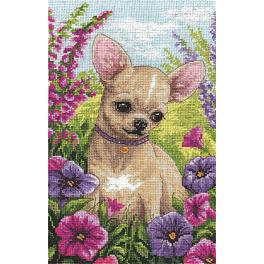Zestaw z muliną - Chihuahua