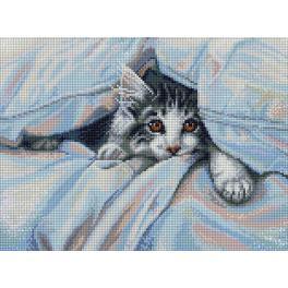 Zestaw do diamond painting - Kot pod kocykiem