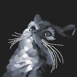 Zestaw z nadrukiem i muliną - Szary kot