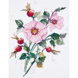 PAC 1888 Zestaw do haftu - Dzika róża