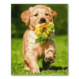 PC4050743 Malowanie po numerach - Pies z kwiatkiem