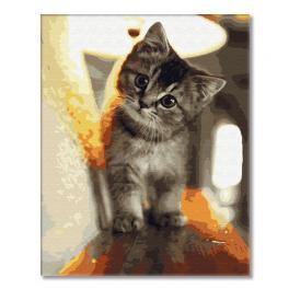 GX29845 Malowanie po numerach - Malutki kotek