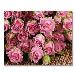 GX34269 Malowanie po numerach - Subtelne róże